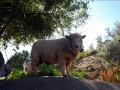 Babydoll Sheep - Organic & Sustainable Farming